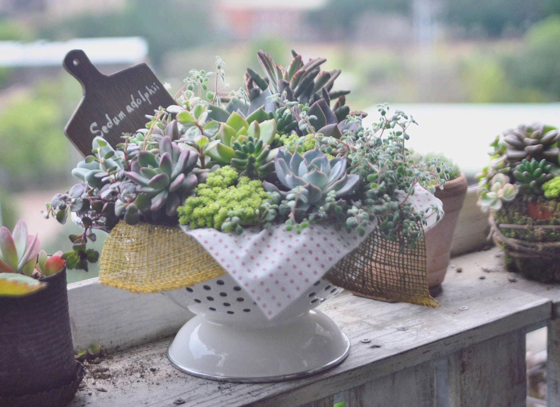 生活中容易取得的器皿,隨興與花草搭配,多了幾分悠閒況味。圖片由茉莉提供。